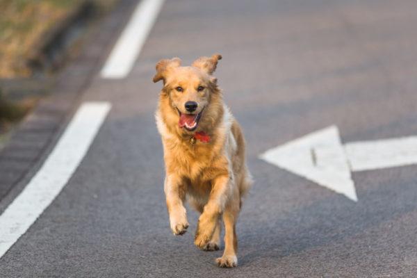 Dicas De Como Desestressar Seu Pet E O Manter De Bom Humor…